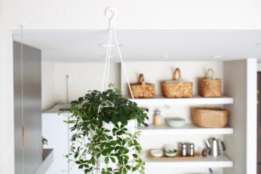 【インテリア】吊り下げ観葉植物と、掲載のお知らせ